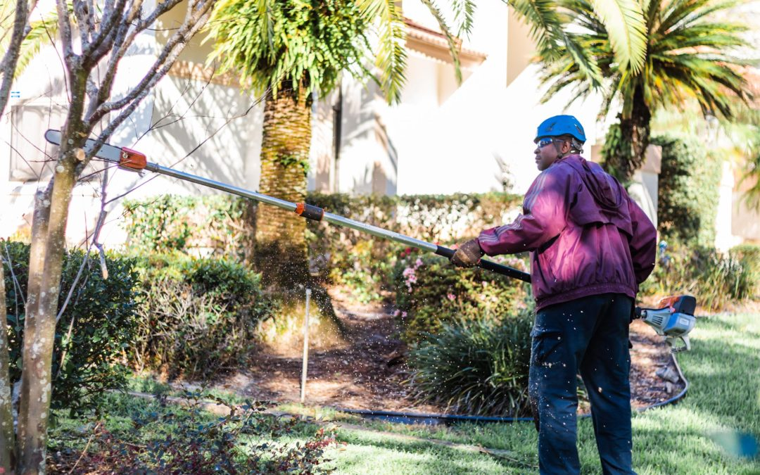 Why It's Important to Have Your Trees Pruned Before Hurricane Season Starts