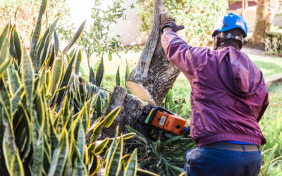 How Long Should My Tree Removal Take? A Guide About What to Expect for a Tree Removal Process