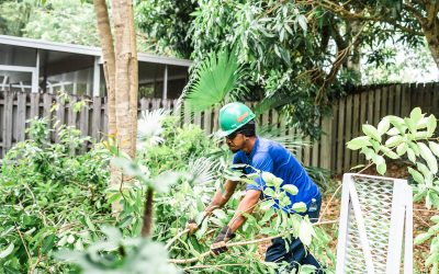 5 Landscaping Things You Should Take Care of Before a Hurricane Hits