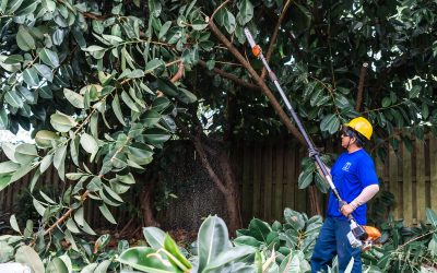 On the Fence About Professional Property Maintenance Before Hurricane Season? Here's Why It's Important