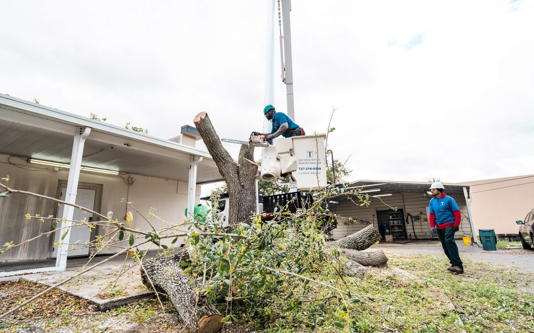 Signs That a Tree On Your Property Should Be Professionally Removed Before Hurricane Season