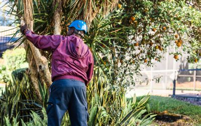 Your Guide to the Biggest Tree Maintenance Mistakes to Avoid Before Hurricane Season Begins