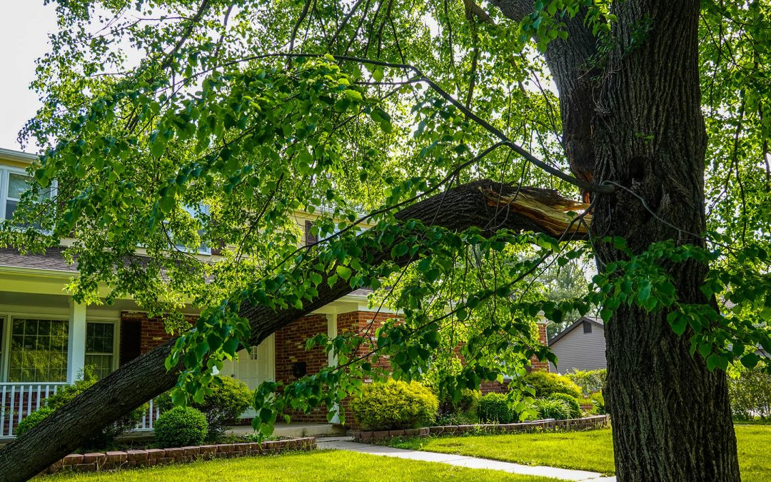Noticing a Lot of Broken Branches on Your Tree? Here's Why You Should Look Into It.