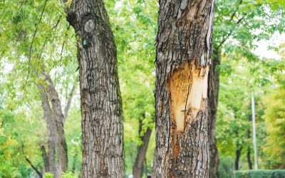 Are There Cracks or Holes in Your Tree Bark? Here's What That Means