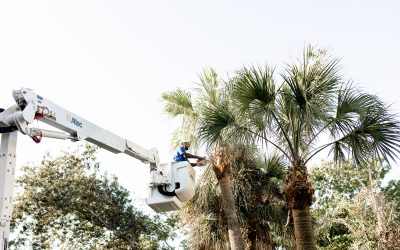 5 Signs that Tree Removal Really is Your Only Option