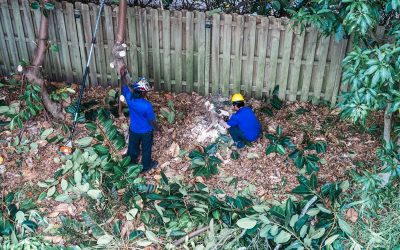 5 Ways that Tucker Enterprise Guarantees Effective, Efficient Tree and Stump Removal in Tampa Bay.