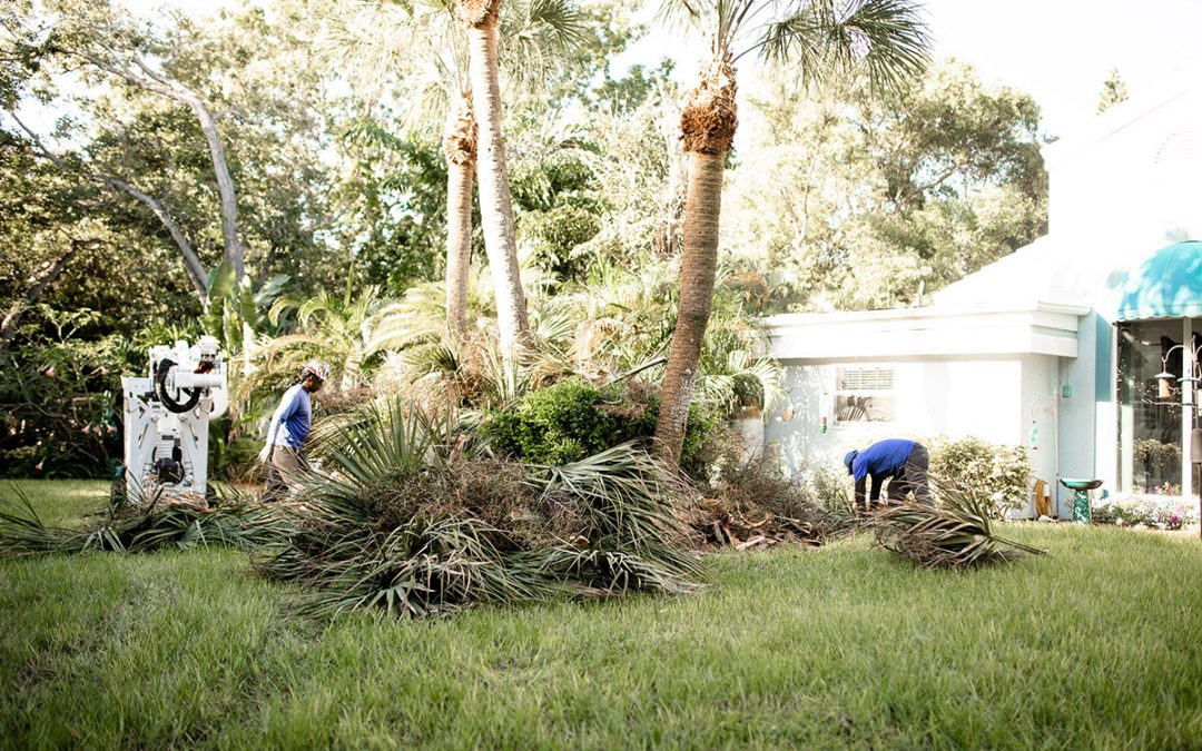Reasons Why No Tree Removal is Complete Without Stump Grinding