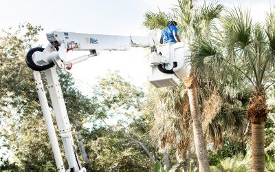 Do you have a tight space on your property that no tree removal company can get into? If so, read this.