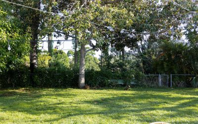 Do you need tree removal before hurricane season? Signs that a tree on your property won't make it past the storms.
