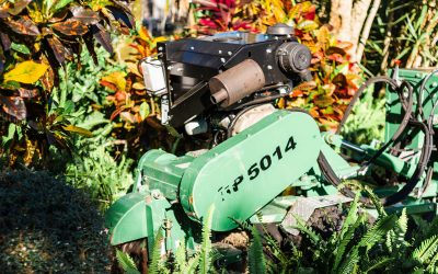 Every Tree Removal Should End with Stump Grinding. Here's why.