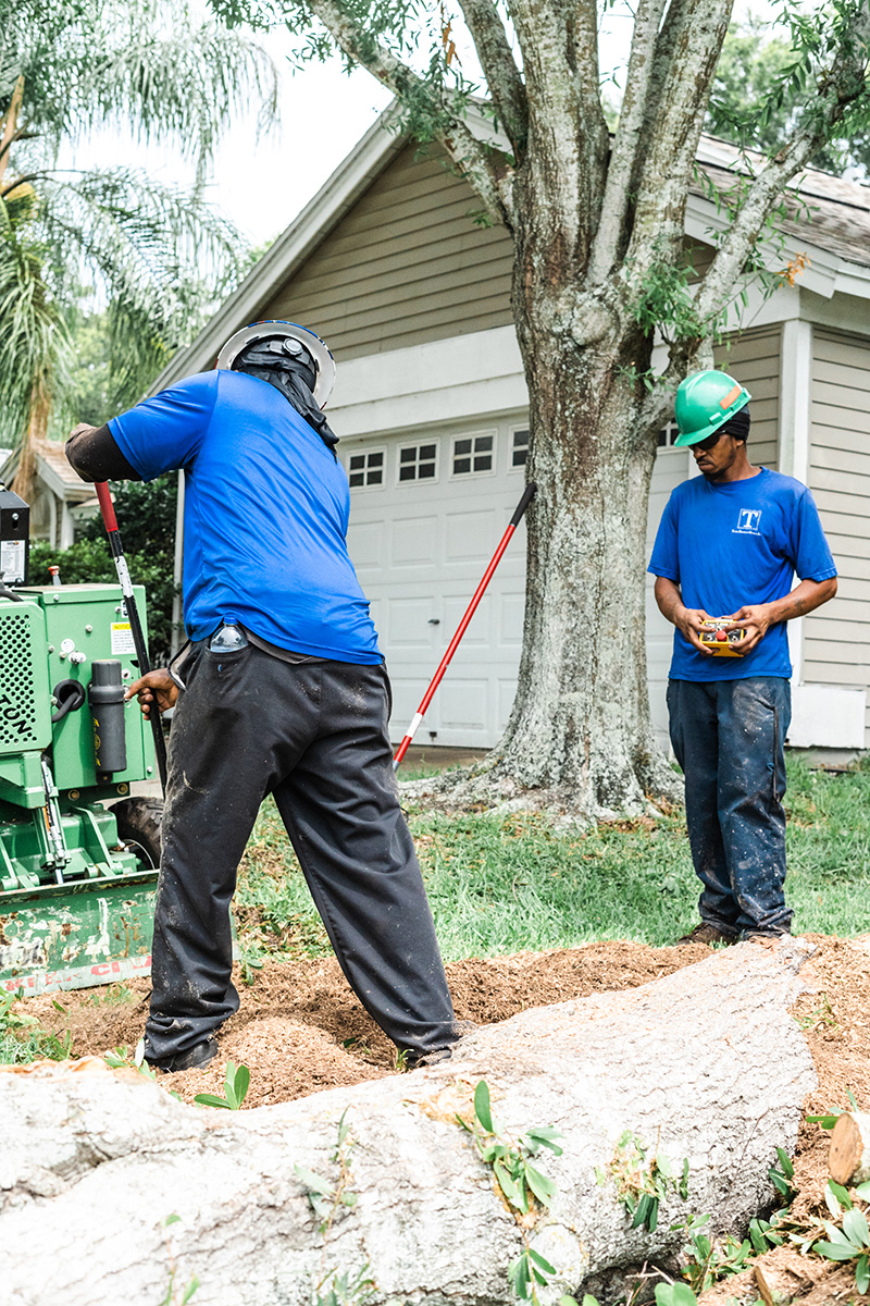stump grinding in Clearwater