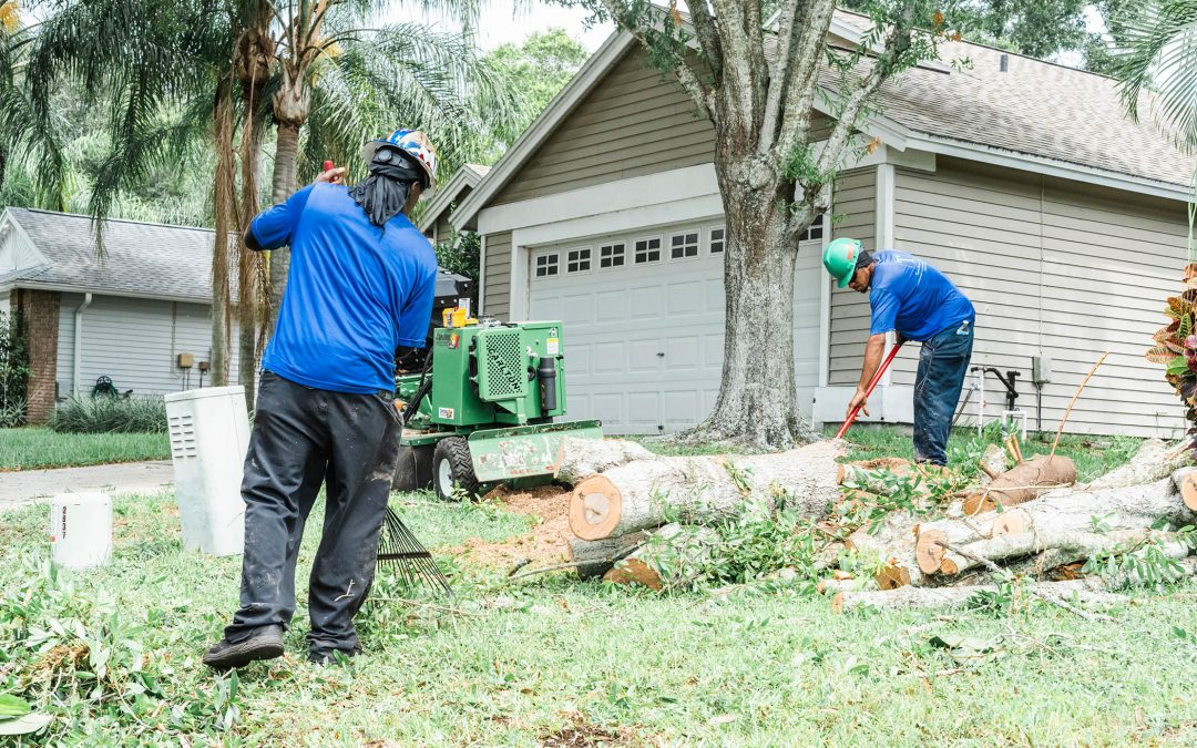 Do I Need Stump Grinding Services? A Look at How Stump Grinding Promotes the Health and Safety of Your Property.