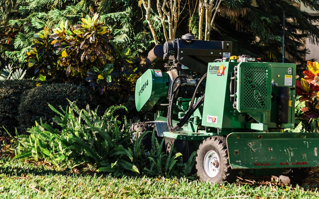 Got a Stump On Your Property That You Keep Tripping Over? Here's How To Take Care Of It.
